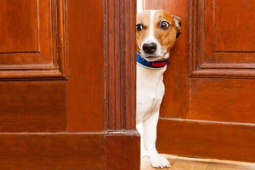 Os animais podem perceber o medo através do olfato?