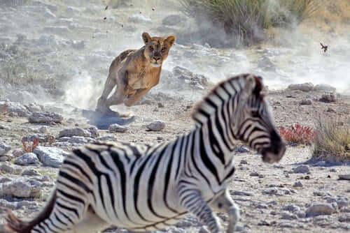Seleção natural e adaptação no ambiente animal