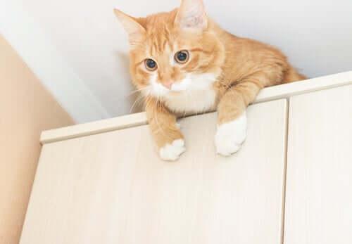 Medidas preventivas para proteger seu gato