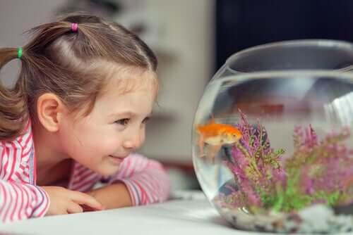 Limpeza do aquário: o que fazer com os peixes?