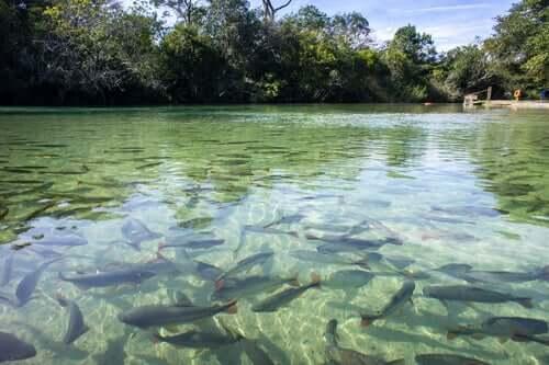 A osmorregulação nos peixes