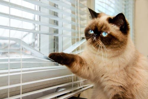 tipos de portas para gatos