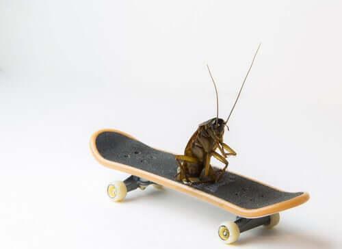Por que as baratas são consideradas um dos insetos mais antigos?