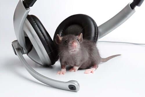 efeitos da música nos animais