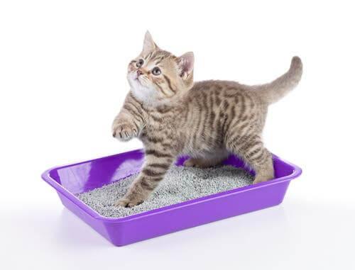 Síndrome urológica felina: sintomas e tratamento