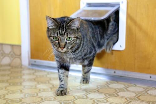 Os diferentes tipos de portas para gatos e como escolher