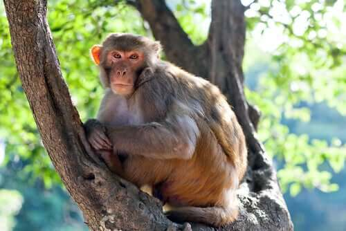 Túmulos de animais: um macaco de 4.000 anos