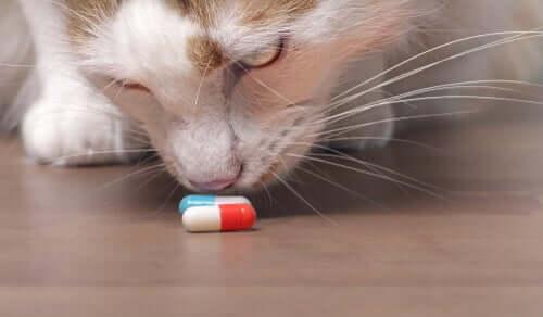 Como proteger seu gato dos venenos domésticos
