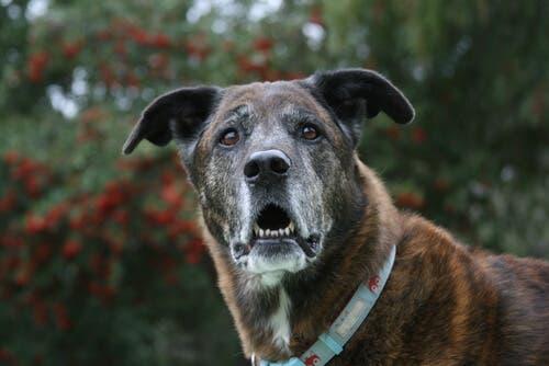A personalidade dos cães muda com o passar dos anos?