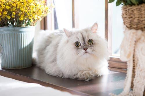 organizar as coisas do seu gato em casa