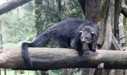 animais com cauda preênsil