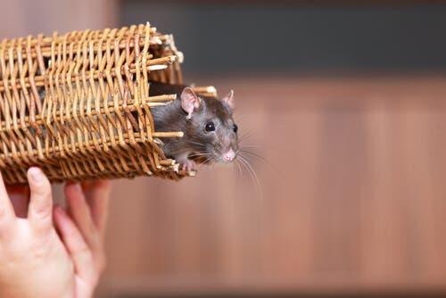 4 animais que podem viver em apartamento