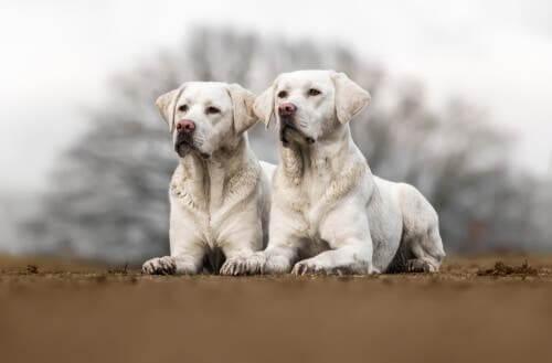 O que você precisa saber sobre a clonagem de animais de estimação