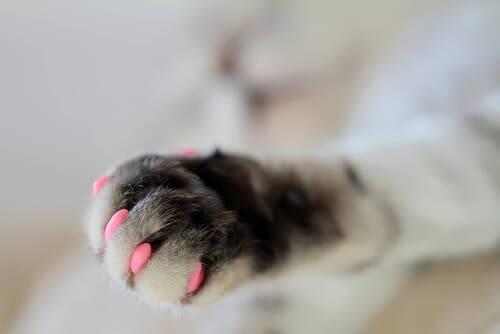 As unhas do gato