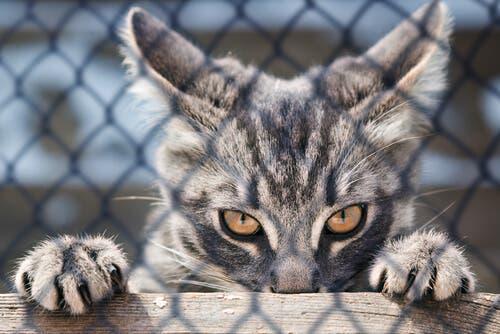 As unhas do gato: para que servem?