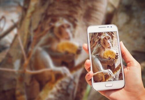Chimpanzé usando celular: saiba por que não compartilhar o vídeo