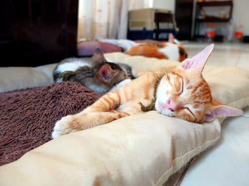 Como organizar as coisas do seu gato em casa?