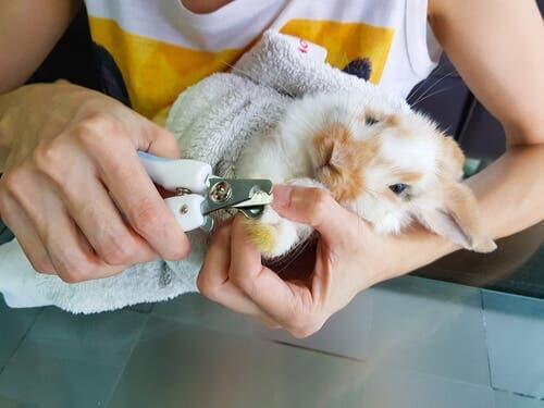 Como cuidar das unhas do seu coelho