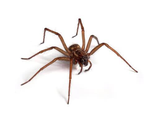 Curiosidades sobre as aranhas
