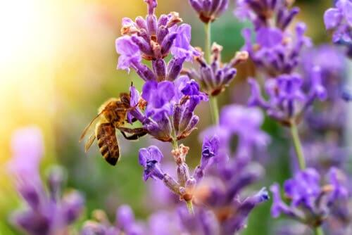 As 5 flores que atraem as abelhas