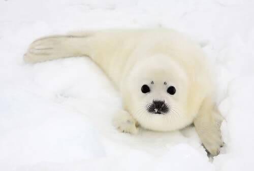 animais que habitam o Ártico