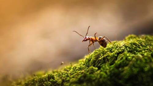 O papel da formiga-rainha nas colônias
