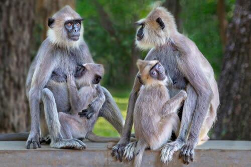 Reprodução e família