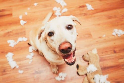 A memória dos cães