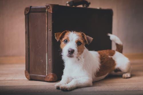 Mudar de casa com animais de estimação: tudo o que você precisa saber
