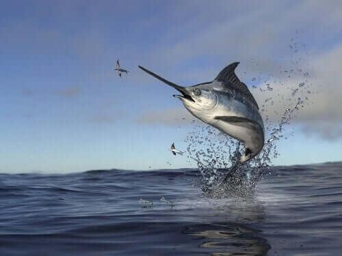 Peixe-espada: cuidados e doenças
