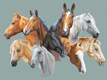 Cores da pelagem do cavalo