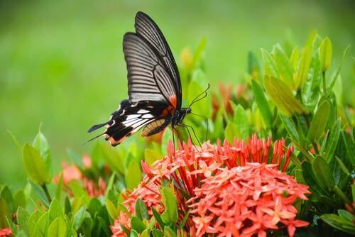 Benefícios dos pequenos insetos para o jardim