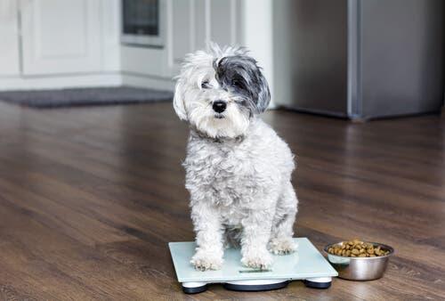 Peso ideal para cães e gatos