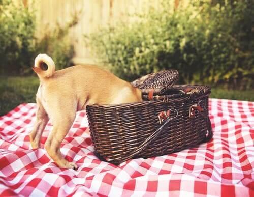 Dicas para fazer um piquenique para cães