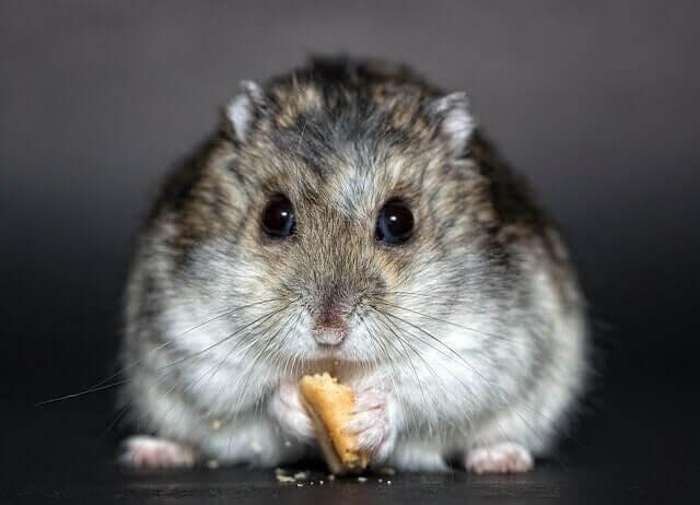 Problemas digestivos em roedores: o que fazer?
