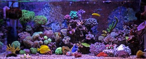 O substrato ideal para o seu aquário: cascalho ou areia?