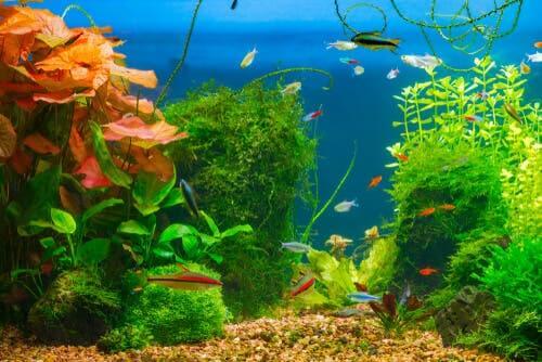 O substrato ideal para o seu aquário
