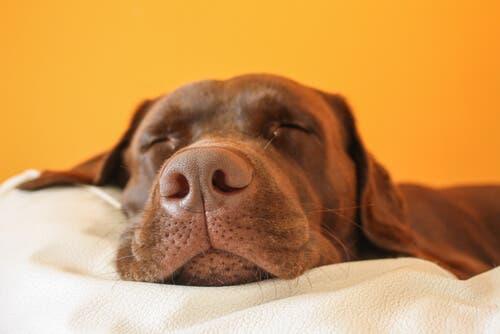 Tapete ou almofada: qual escolher para o cachorro?