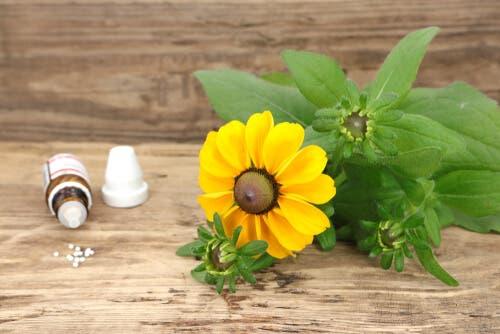 O que é a homeopatia para animais de estimação?