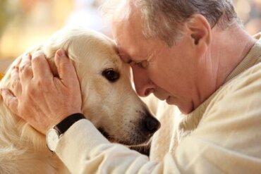 6 cuidados especiais para animais de estimação idosos