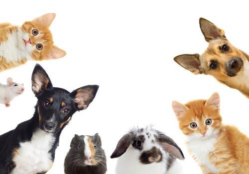 Qual é o animal de estimação certo para mim?