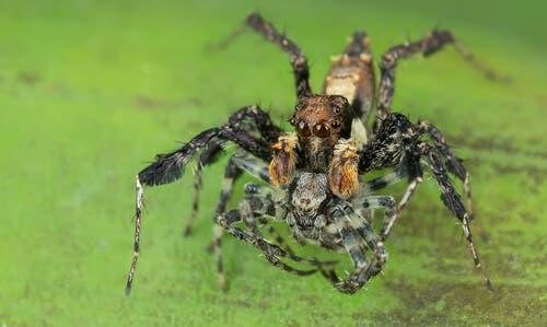 as técnicas de caça das aranhas
