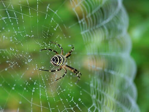 técnicas de caça das aranhas