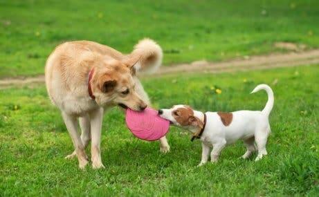 Mito 4: um ano na vida de uma pessoa é igual a sete de um cachorro