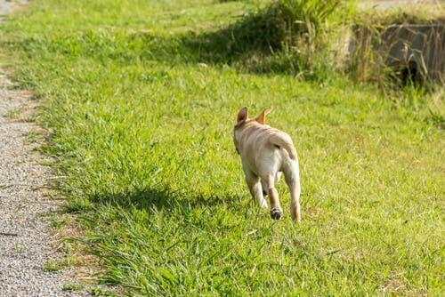 Como impedir o cachorro de fugir