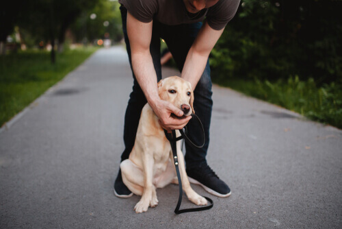 O que fazer se eu meu cachorro engolir algo que lhe causa asfixia?