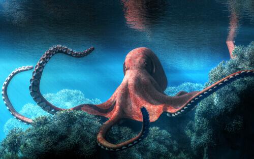 O que você sabe sobre os cefalópodes?