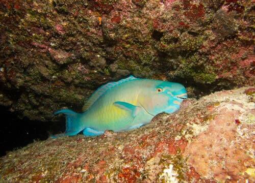 O repouso dos peixes: dormindo com um olho aberto