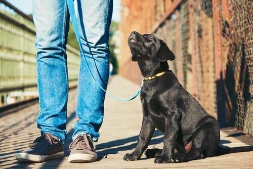 Educação canina para iniciantes: 5 dicas