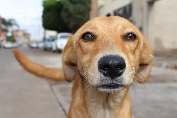 Mitos sobre animais de estimação: um nariz seco indica uma doença